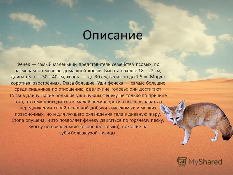 Описание Фенек самый маленький представитель семейства псовых, по размерам он меньше домашней кошки. Высота в холке 1822 см, длина тела 3040 см, хвоста до 30 см, весит он до 1,5 кг. Морда короткая, заострённая. Глаза большие. Уши фенечка самые больши