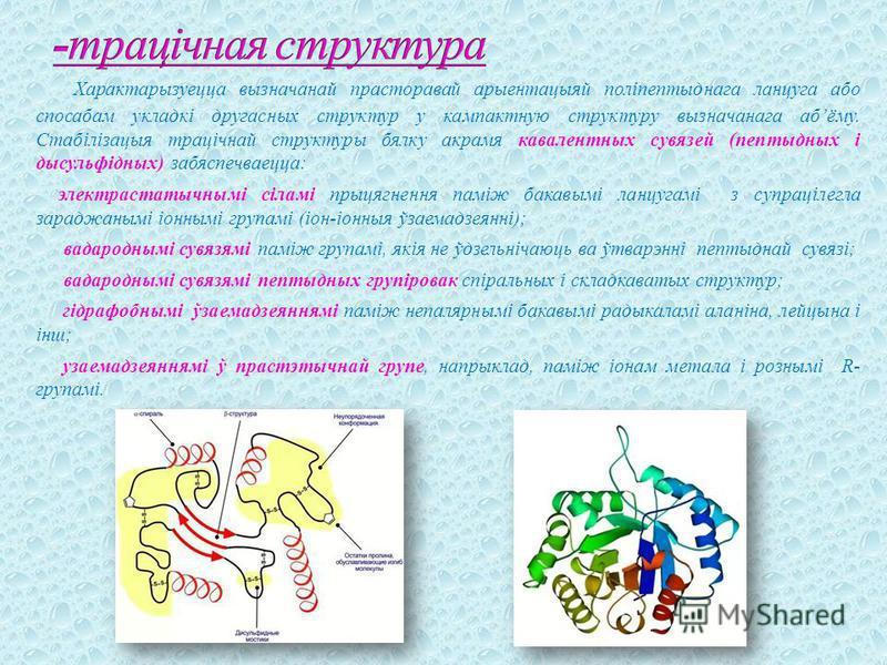 Характарызуецца вызначанай прасторавай арыентацыяй поліпептыднага ланцуга або спосабам укладкі другасных структур у кампактную структуру вызначанага абёму. Стабілізацыя трацічнай структуры бялку акрамя кавалентных сувязей (пептыдных і дысульфідных) з