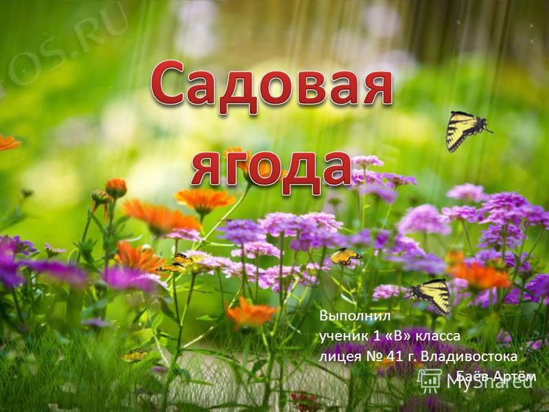 Выполнил ученик 1 «В» класса лицея 41 г. Владивостока Баёв Артём