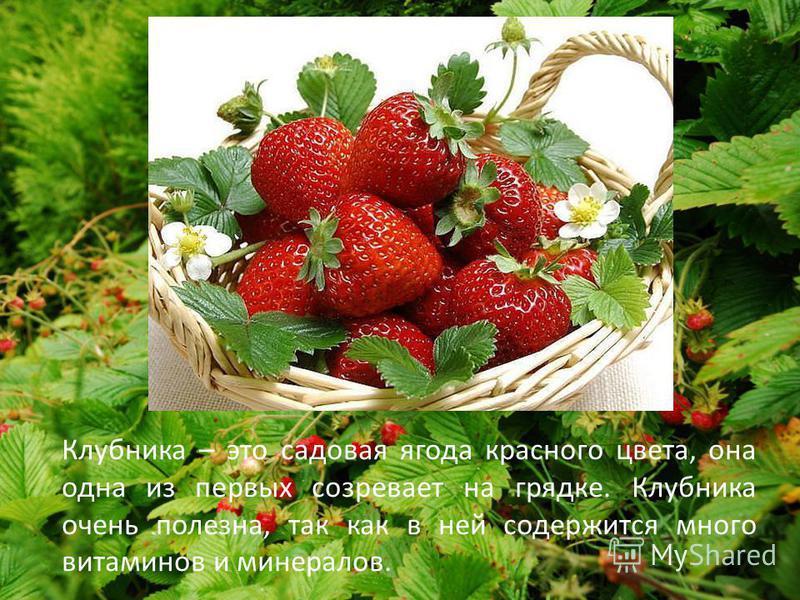Клубника – это садовая ягода красного цвета, она одна из первых созревает на грядке. Клубника очень полезна, так как в ней содержится много витаминов и минералов.