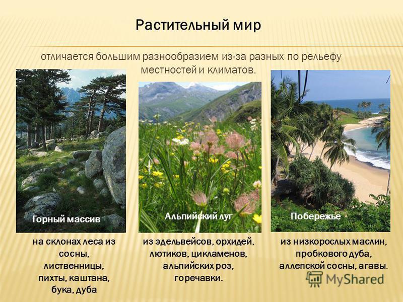 отличается большим разнообразием из-за разных по рельефу местностей и климатов. Растительный мир Горный массив на склонах леса из сосны, лиственницы, пихты, каштана, бука, дуба Альпийский луг из эдельвейсов, орхидей, лютиков, цикламенов, альпийских р