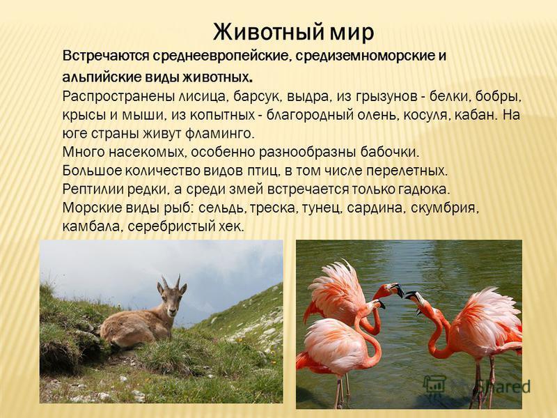Животный мир Встречаются среднеевропейские, средиземноморские и альпийские виды животных. Распространены лисица, барсук, выдра, из грызунов - белки, бобры, крысы и мыши, из копытных - благородный олень, косуля, кабан. На юге страны живут фламинго. Мн