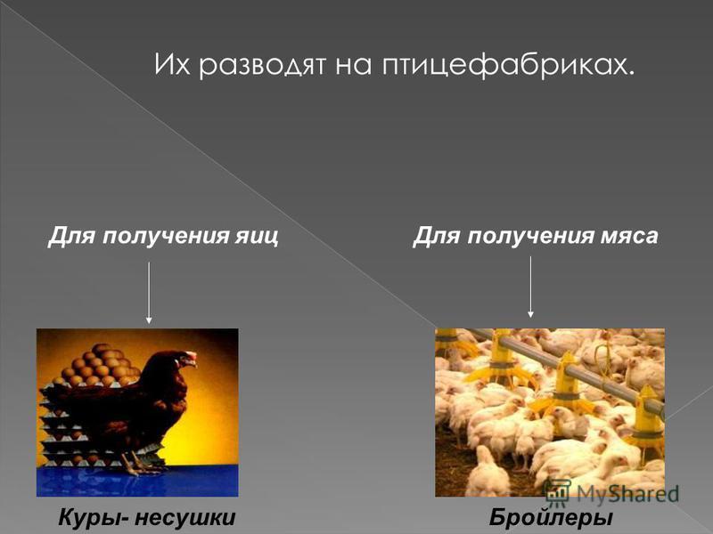 Домашние птицы -это куры,гуси,утки,индейки.