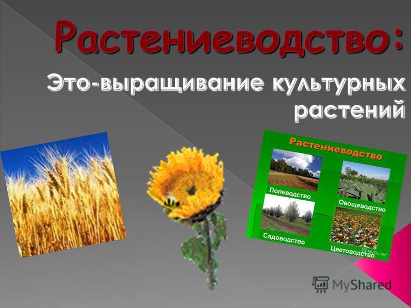 «Растениеводство»