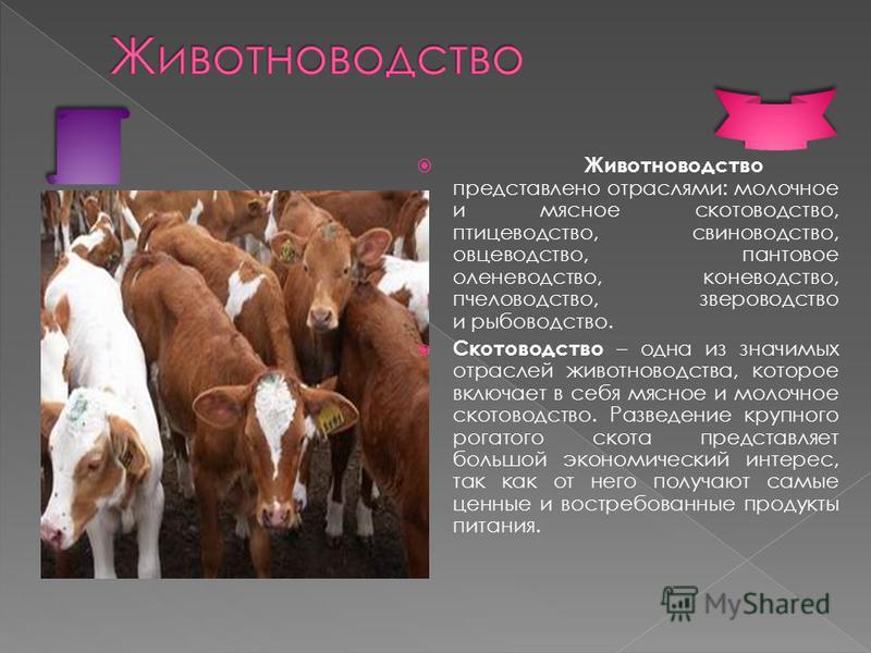 Разведение крупного рогатого скота Разведение мелкого рогатого скота (овцеводство) коневодство пчеловодство птицеводство кролиководство свиноводство рыбоводство