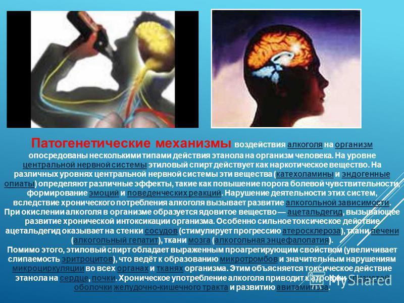 Патогенетические механизмы воздействия алкоголя на организм опосредованы несколькими типами действия этанола на организм человека. На уровне центральной нервной системы этиловый спирт действует как наркотическое вещество. На различных уровнях централ