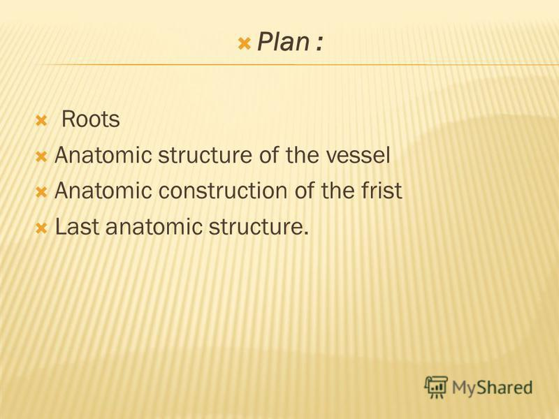 Plan : Roots Anatomic structure of the vessel Anatomic construction of the frist Last anatomic structure.