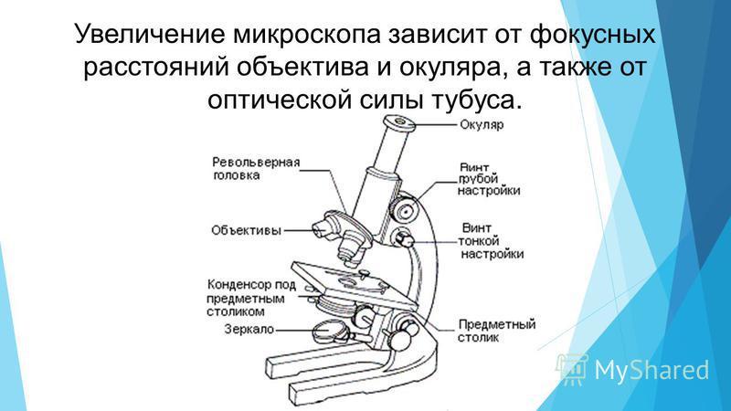 Увеличение микроскопа зависит от фокусных расстояний объектива и окуляра, а также от оптической силы тубуса.