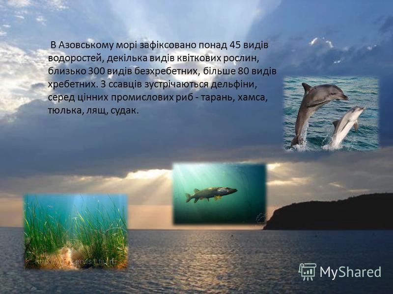 В Азовському морі зафіксовано понад 45 видів водоростей, декілька видів квіткових рослин, близько 300 видів безхребетних, більше 80 видів хребетних. З ссавців зустрічаються дельфіни, серед цінних промислових риб - тарань, хамса, тюлька, лящ, судак.