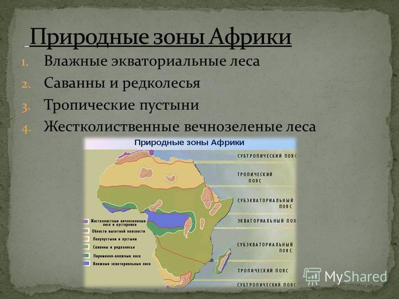 1. Влажные экваториальные леса 2. Саванны и редколесья 3. Тропические пустыни 4. Жестколиственные вечнозеленые леса