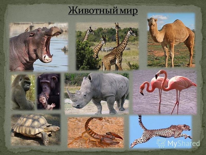 Проекта по теме удивительный мир животных 3 класс