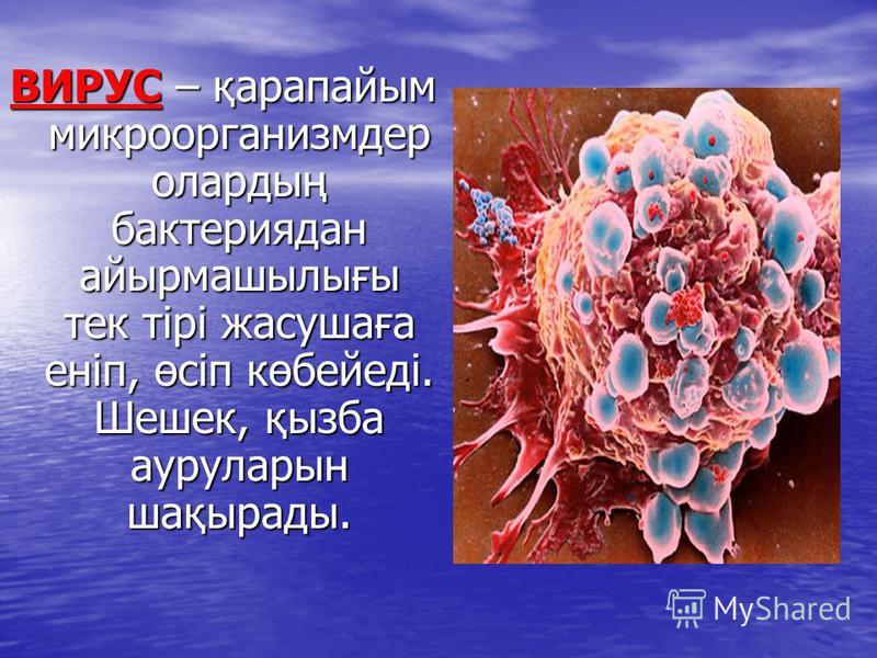 ВИРУС – қарапайым микроорганизмдер олардың бактерияден айырмашылығы тек тірі жасушаға еніп, өсіп көбейеді. Шешек, қызба ауруларын шақырады.