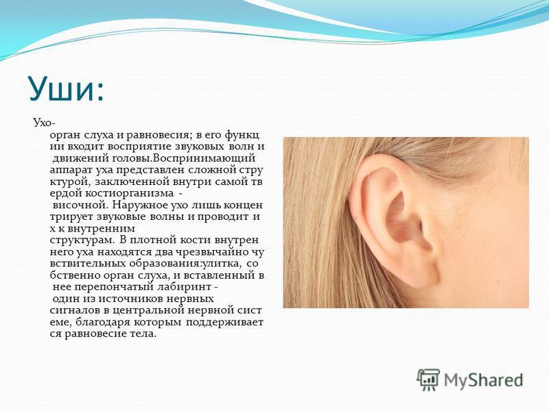 Уши: Ухо- орган слуха и равновесия; в его функции входит восприятие звуковых волн и движений головы.Воспринимающий аппарат уха представлен сложной структурой, заключенной внутри самой твердой кости организма - височной. Наружное ухо лишь концентрируе