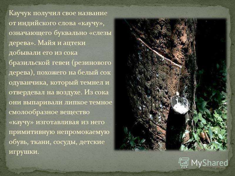 Каучук получил свое название от индийского слова «каучукк», означающего буквально «слезы дерева». Майя и ацтеки добывали его из сока бразильской гевеи (резинового дерева), похожего на белый сок одуванчика, который темнел и отвердевал на воздухе. Из с
