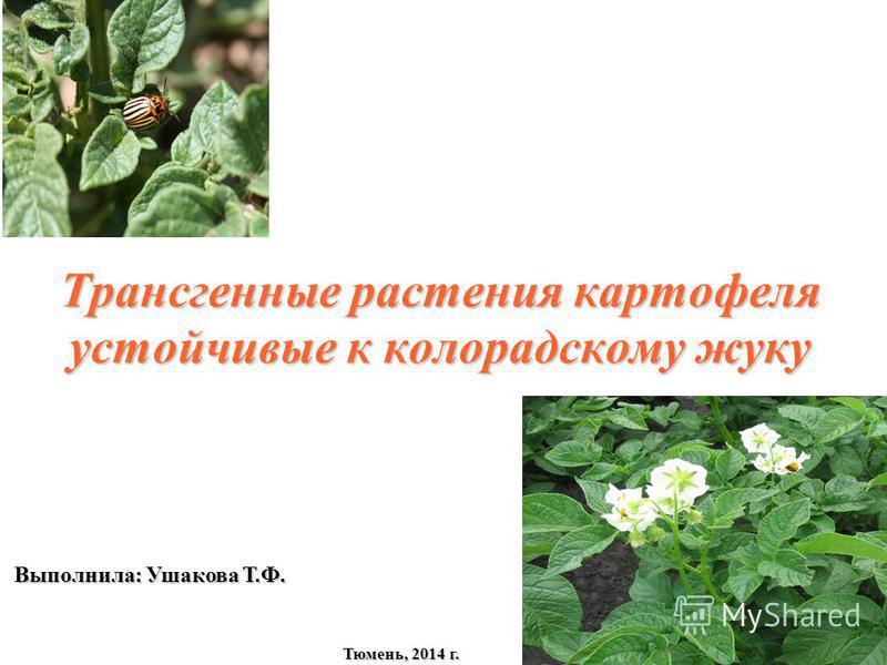 Трансгенные растения картофеля устойчивые к колорадскому жуку Выполнила: Ушакова Т.Ф. Тюмень, 2014 г.