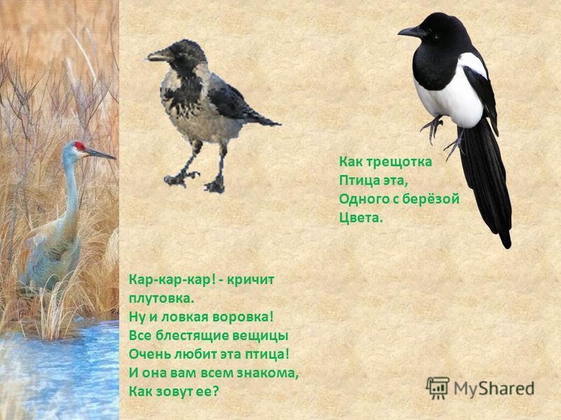 Кар-кар-кар! - кричит плутовка. Ну и ловкая воровка! Все блестящие вещицы Очень любит эта птица! И она вам всем знакома, Как зовут ее? Как трещотка Птица эта, Одного с берёзой Цвета.