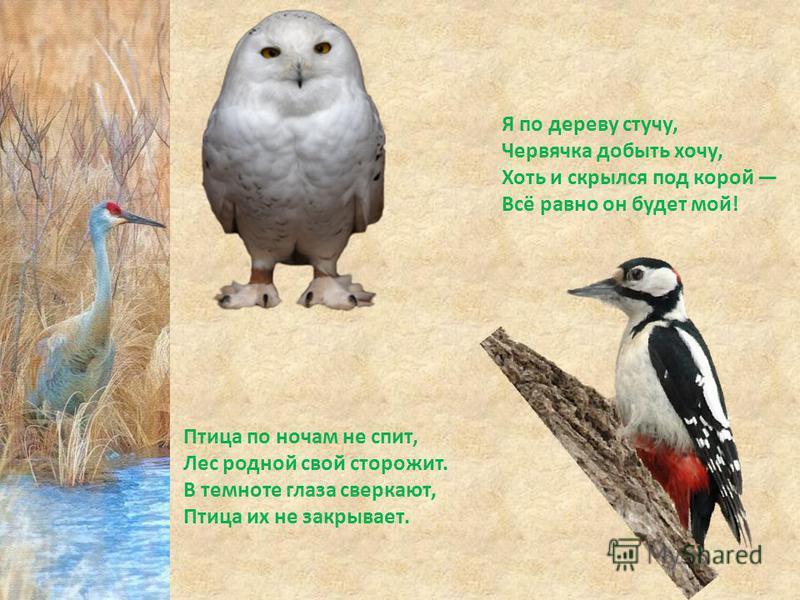 Птица по ночам не спит, Лес родной свой сторожит. В темноте глаза сверкают, Птица их не закрывает. Я по дереву стучу, Червячка добыть хочу, Хоть и скрылся под корой Всё равно он будет мой!