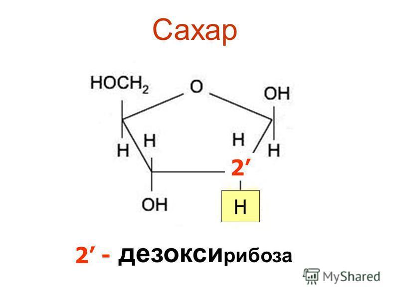 Сахар дезоксирибоза 2 H 2 -