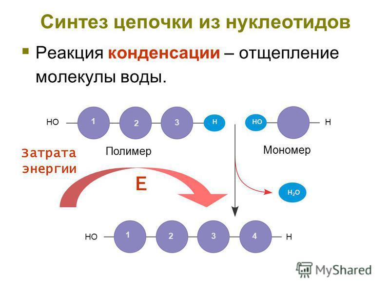Синтез цепочки из нуклеотидов Реакция конденсации – отщепление молекулы воды. HOH 1 2 3 H 1 23 4 H H2OH2O Полимер Мономер Затрата энергии Е