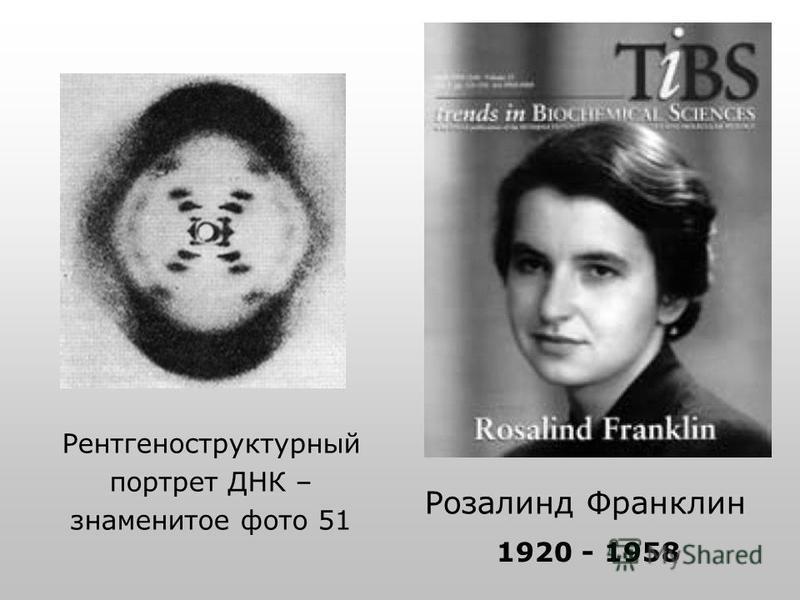 Розалинд Франклин Рентгеноструктурный портрет ДНК – знаменитое фото 51 1920 - 1958