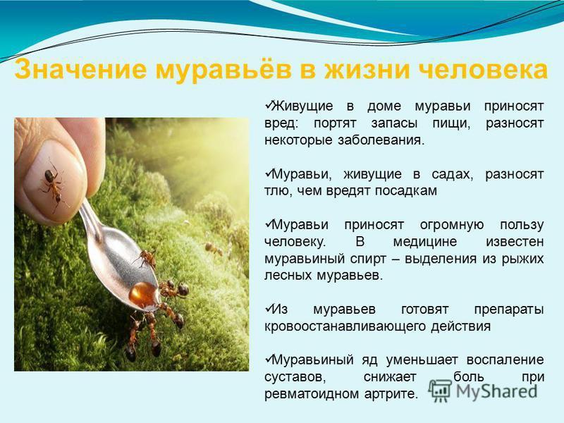 Значение муравьёв в жизни человека Живущие в доме муравьи приносят вред: портят запасы пищи, разносят некоторые заболевания. Муравьи, живущие в садах, разносят тлю, чем вредят посадкам Муравьи приносят огромную пользу человеку. В медицине известен му