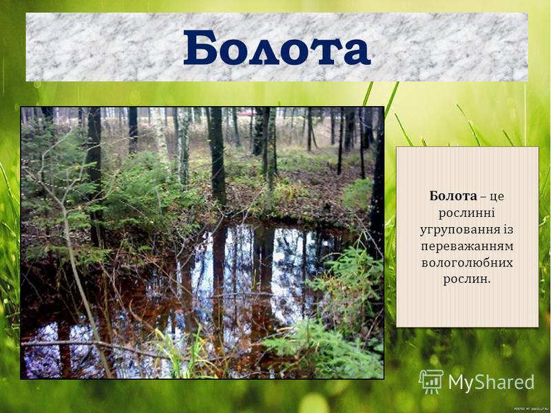 Болота Болота – це рослинні угруповання із переважанням вологолюбних рослин.