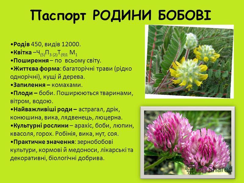 Паспорт РОДИНИ БОБОВІ Родів 450, видів 12000. Квітка –Ч (5) П 3 (2) Т (9)1 М 1 Поширення – по всьому світу. Життєва форма: багаторічні трави (рідко однорічні), кущі й дерева. Запилення – комахами. Плоди – боби. Поширюються тваринами, вітром, водою. Н