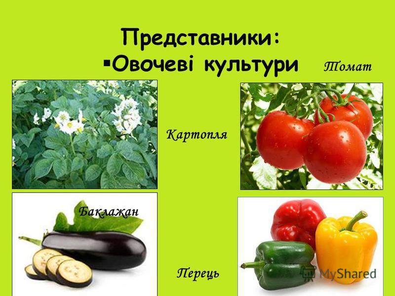 Представники: Овочеві культури Картопля Томат Баклажан Перець