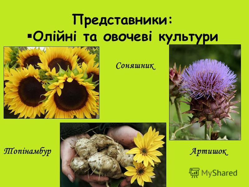 Представники: Олійні та овочеві культури Соняшник АртишокТопінамбур