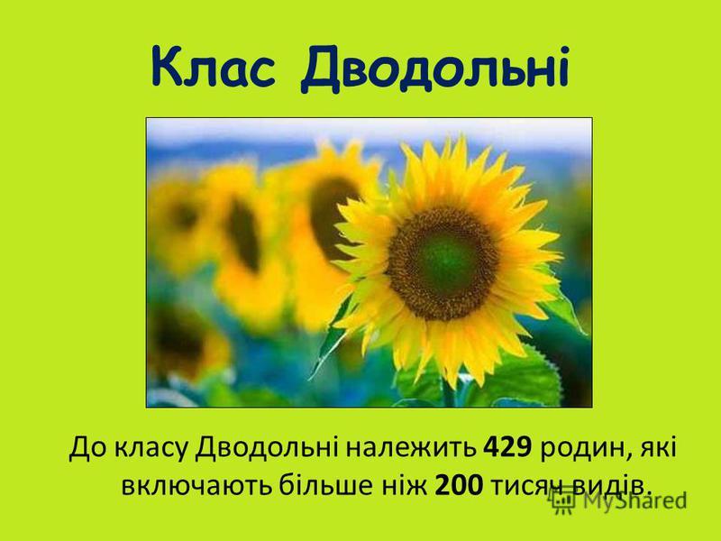Клас Дводольні До класу Дводольні належить 429 родин, які включають більше ніж 200 тисяч видів.