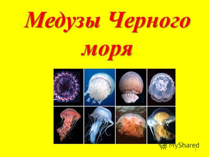 Медузы Черного моря \ 1