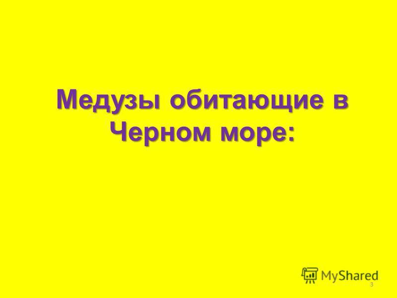 Медузы обитающие в Черном море: 3