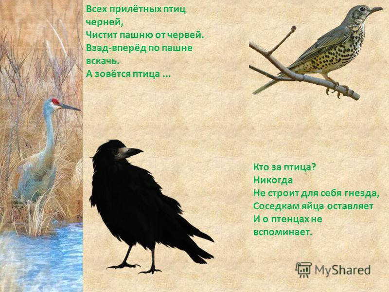Всех прилётных птиц черней, Чистит пашню от червей. Взад-вперёд по пашне вскачь. А зовётся птица... Кто за птица? Никогда Не строит для себя гнезда, Соседкам яйца оставляет И о птенцах не вспоминает.