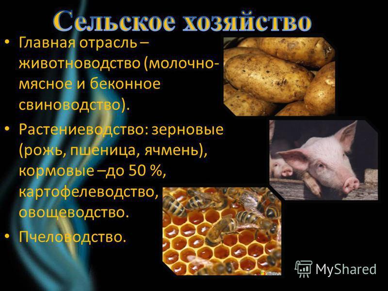 Главная отрасль – животноводство (молочно- мясное и беконное свиноводство). Растениеводство: зерновые (рожь, пшеница, ячмень), кормовые –до 50 %, картофелеводство, овощеводство. Пчеловодство.