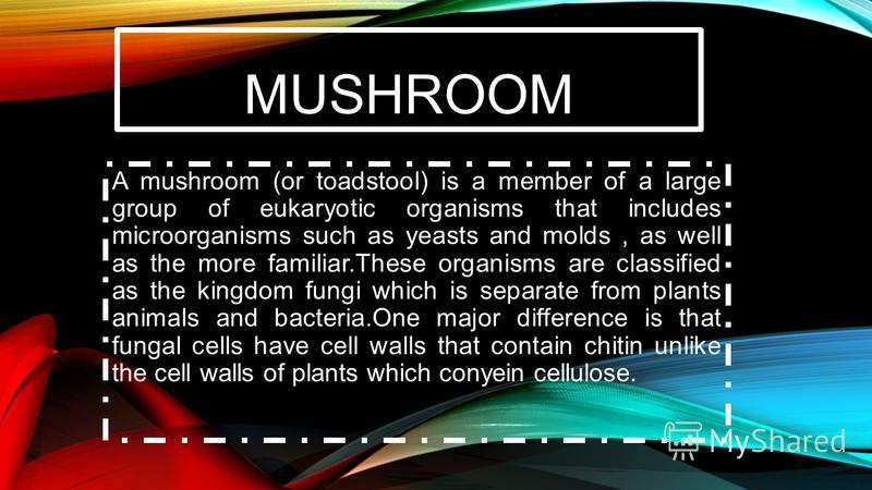 MUSHROOM A mushroom (or toadstool) is a member of a large group of eukaryotic organisms that includes microorganisms such as yeasts and molds, as well as the more familiar.These organisms are classified as the kingdom fungi which is separate from pla