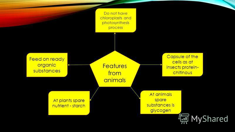 Features from animals Do not have chloroplasts and photosynthesis process Capsule of the cells as at insects protein- chitinous Feed on ready organic substances At plants spare nutrient - starch At animals spare substances is glycogen