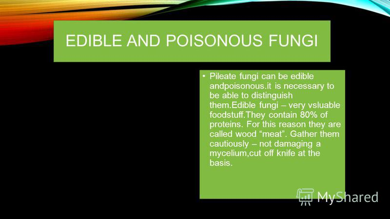 EDIBLE AND POISONOUS FUNGI Pileate fungi can be edible andpoisonous.it is necessary to be able to distinguish them.Edible fungi – very vsluable foodstuff.They contain 80% of proteins. For this reason they are called wood meat. Gather them cautiously