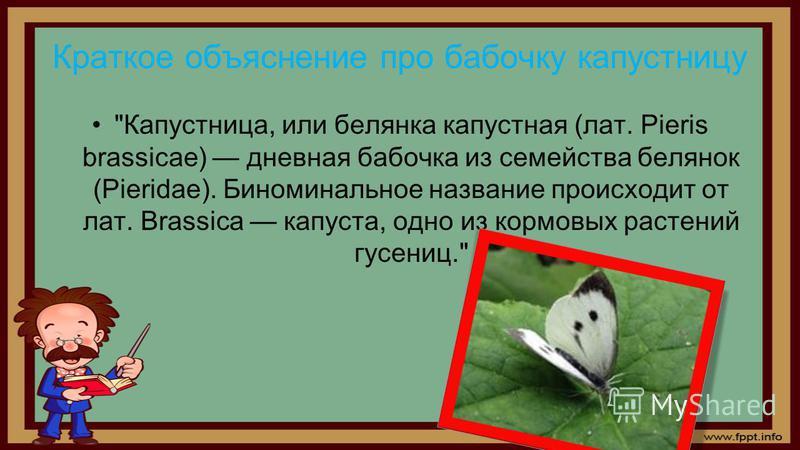 Краткое объяснение про бабочку капустницу Капустница, или белянка капустная (лат. Pieris brassicae) дневная бабочка из семейства белянок (Pieridae). Биноминальное название происходит от лат. Brassica капуста, одно из кормовых растений гусениц.