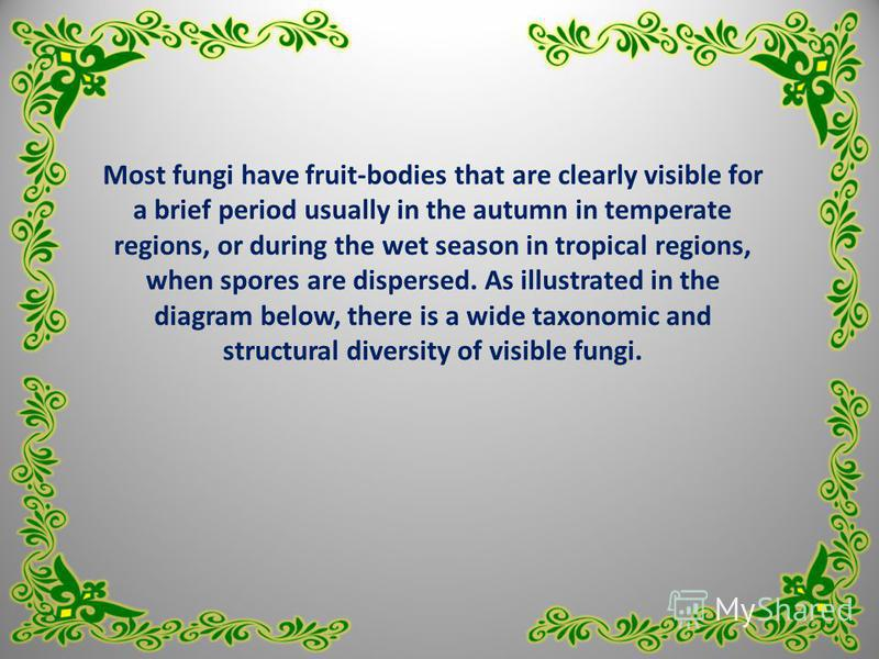 Most fungi have fruit-bodies that are clearly visible for a brief period usually in the autumn in temperate regions, or during the wet season in tropical regions, when spores are dispersed. As illustrated in the diagram below, there is a wide taxonom