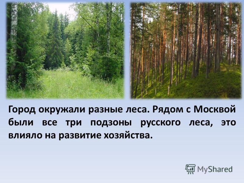 Город окружали разные леса. Рядом с Москвой были все три подзоны русского леса, это влияло на развитие хозяйства.