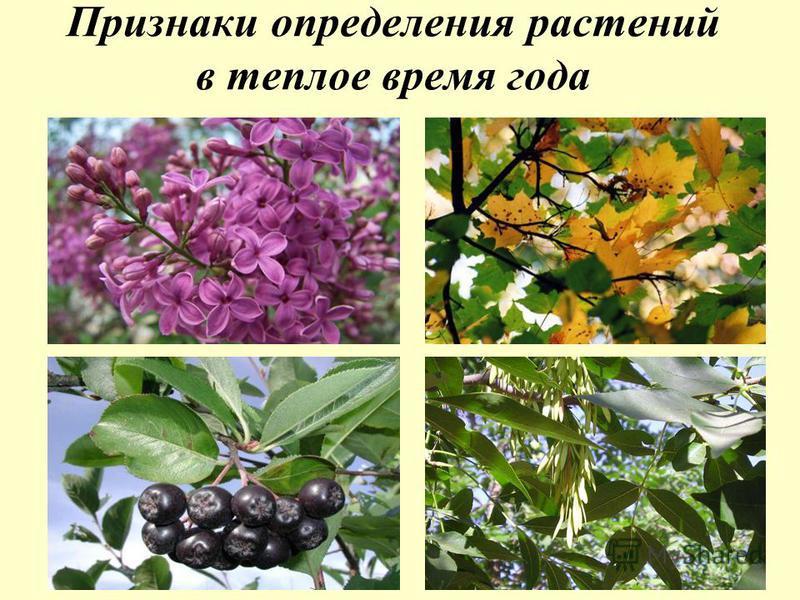 Признаки определения растений в теплое время года