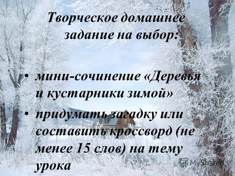 Творческое домашнее задание на выбор: мини-сочинение «Деревья и кустарники зимой» придумать загадку или составить кроссворд (не менее 15 слов) на тему урока