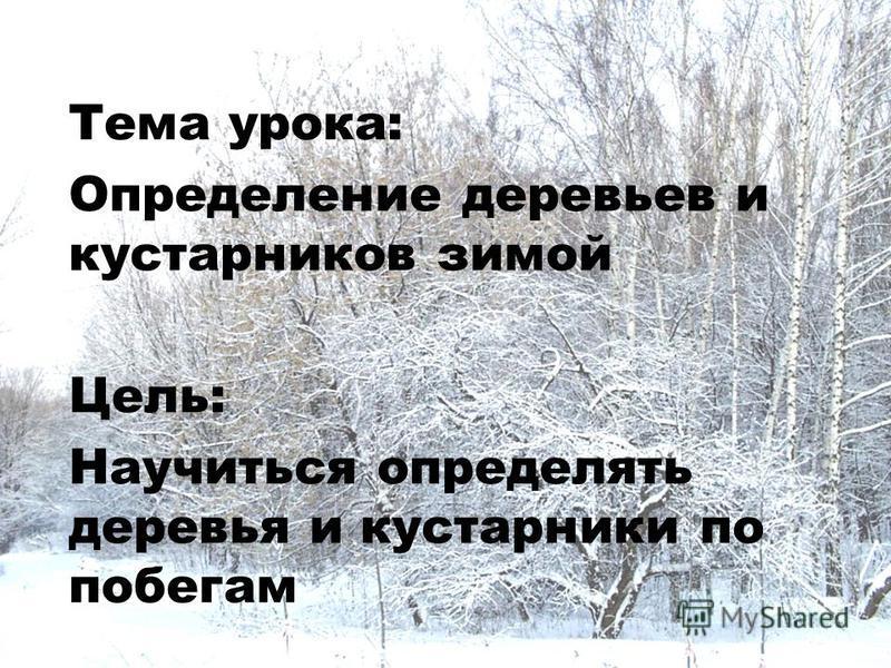 Тема урока: Определение деревьев и кустарников зимой Цель: Научиться определять деревья и кустарники по побегам