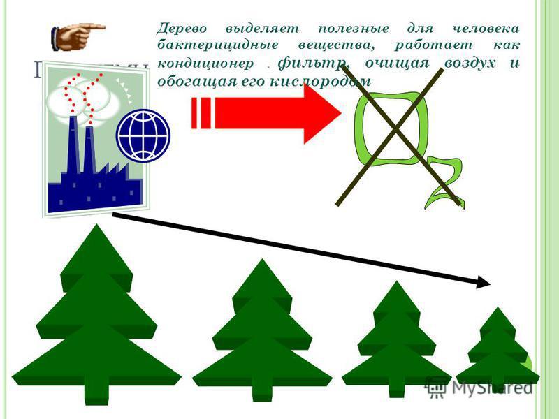 П РОБЛЕМЫ Дерево выделяет полезные для человека бактерицидные вещества, работает как кондиционер и фильтр, очищая воздух и обогащая его кислородом