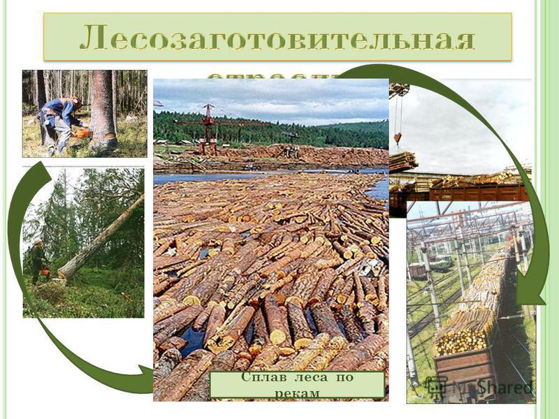 Сплав леса по рекам