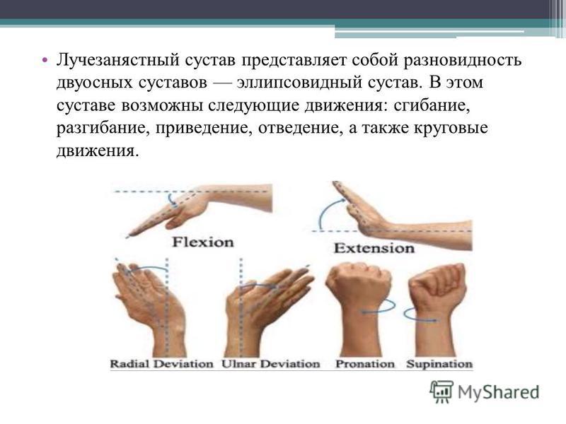 Лучезанястный сустав представляет собой разновидность двуосных суставов эллипсовидный сустав. В этом суставе возможны следующие движения: сгибание, разгибание, приведение, отведение, а также круговые движения.