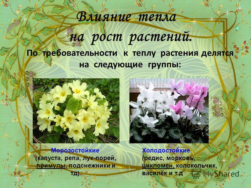 Влияние тепла на рост растений. По требовательности к теплу растения делятся на следующие группы: Морозостойкие (капуста, репа, лук-порей, примулы, подснежники и тд). Холодостойкие. (редис, морковь, цикламен, колокольчик, василёк и т.д