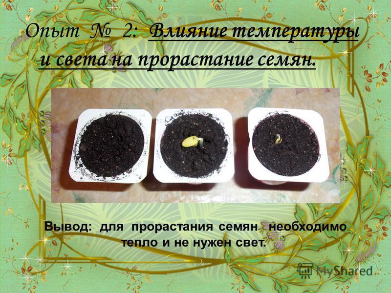 Опыт 2: Влияние температуры и света на прорастание семян. Вывод: для прорастания семян необходимо тепло и не нужен свет.