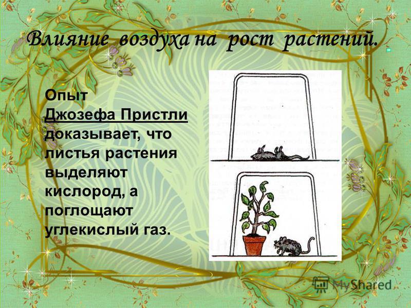 Влияние воздуха на рост растений. Опыт Джозефа Пристли доказывает, что листья растения выделяют кислород, а поглощают углекислый газ.