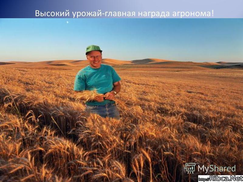 Высокий урожай-главная награда агронома!